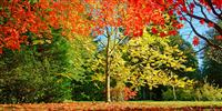 Autumn in the Cotswolds: visit Westonbirt National Arboretum for a good day out