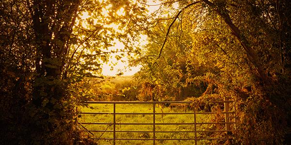 Discover Shropshire's picturesque countryside