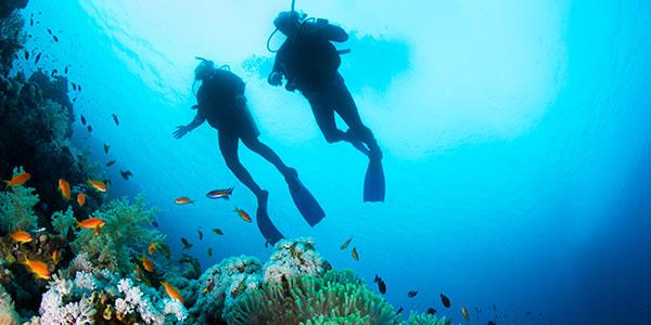 Diving in La Gomera