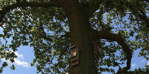 Wildlife in Northumberland: Lucker Hall site is a haven for bats