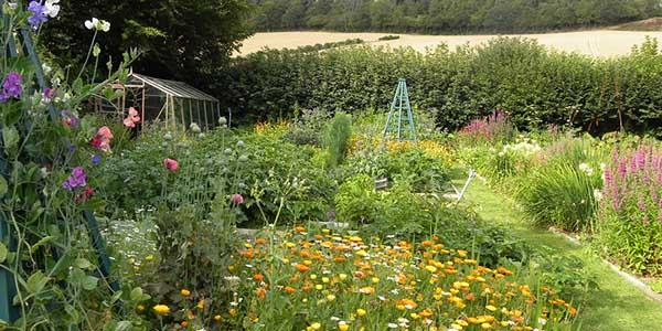Wild about Gardens: learn how to improve your natural spaces
