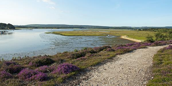 RSPB Arne Nature Reserve in Dorset