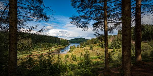 Explore a quieter side of the Trossachs National Park along the Three Lochs Forest Drive