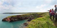 Guided walks around the Pembrokeshire Coast Path