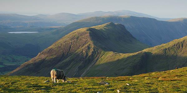 Discover two of the Lake District's rare breeds