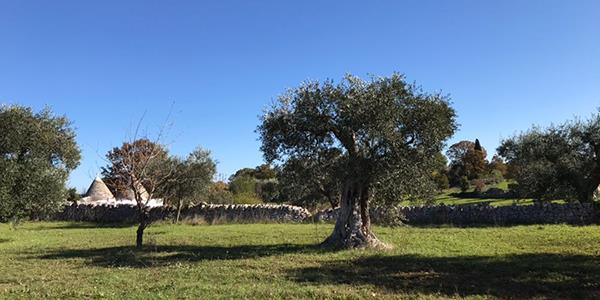 Taste real Italian olive oil produced exclusively on site at the Trulli of Alberobello