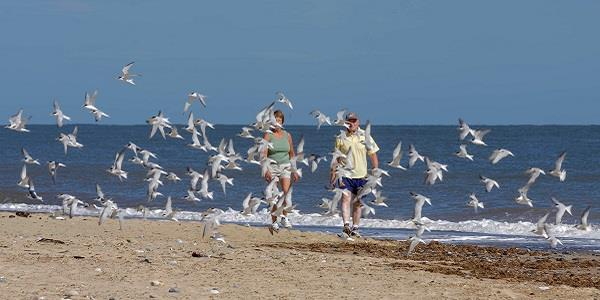 Norfolk's beaches: fun for all ages