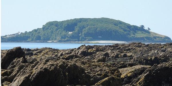 Discover a natural haven: Looe Island Nature Reserve