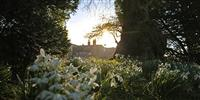 Time to divide your snowdrops...