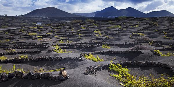 Explore La Geria's vineyards and enjoy Bodega tours in Lanzarote