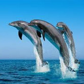 Take a whale watching and dolphin spotting boat tour with OCEANO