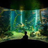 Visit the largest marine aquarium in Wales, Anglesey Sea Zoo