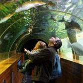 Lakes Aquarium, explore the lakes of the world and discover incredible creatures.