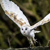 Visit Richmond, then meet some birds of prey